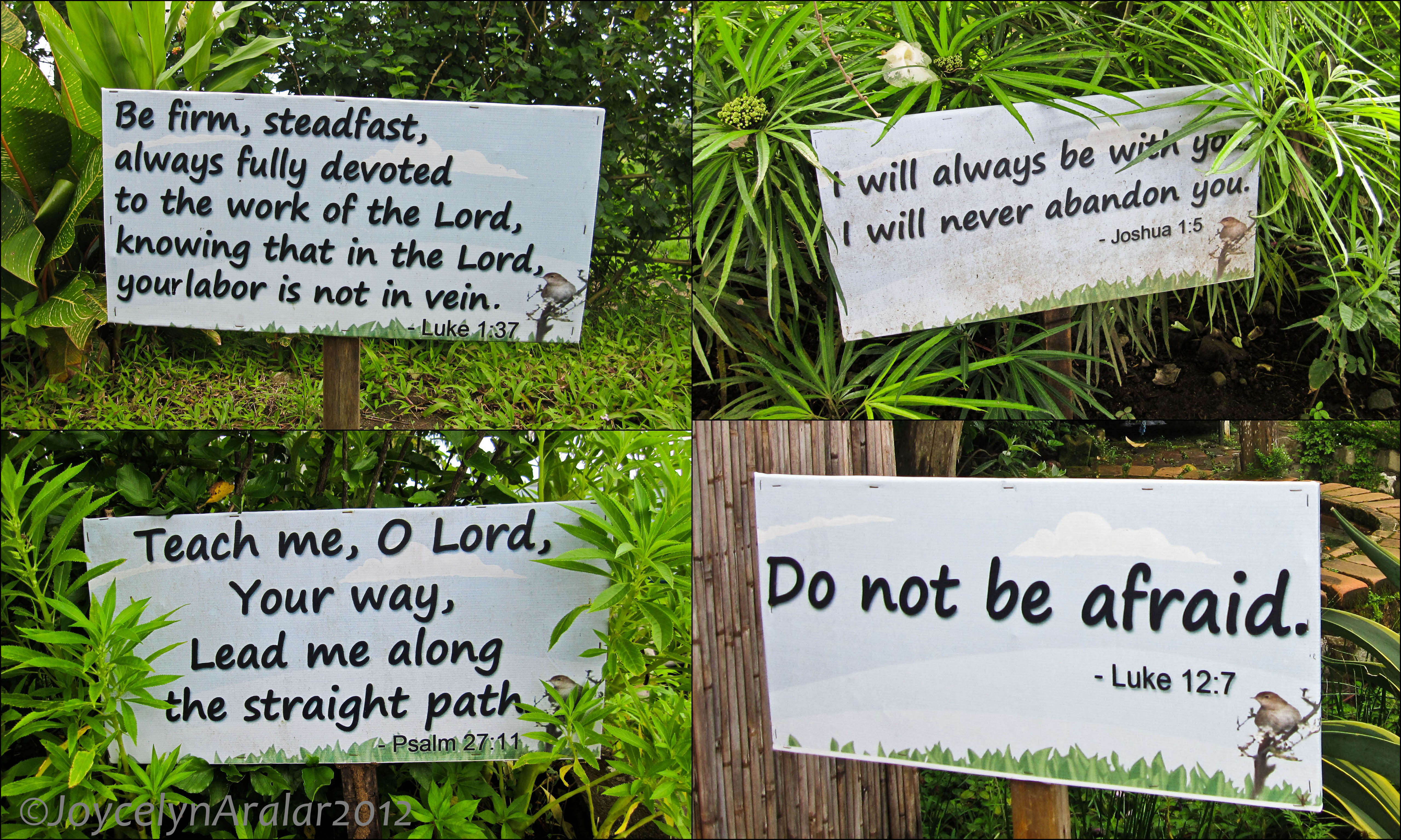 If you walk around the area, you will find these bible verses planted ...